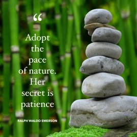 Patience of Nature